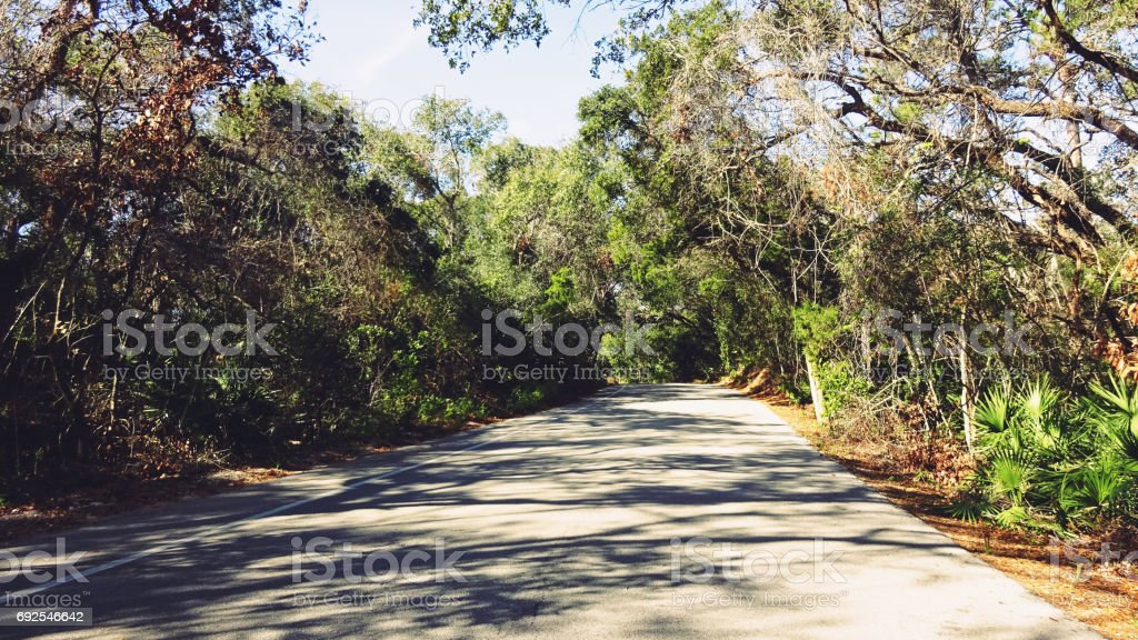 Road Cover by Forest and Bushes stock photo