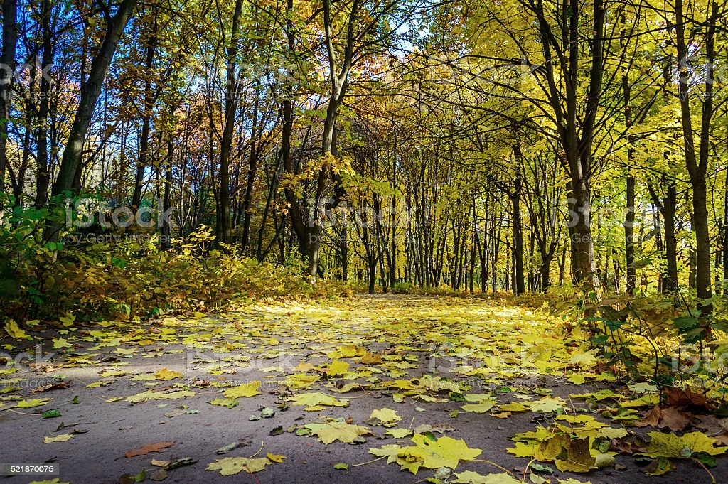 Road covered autumns by foliage. stock photo