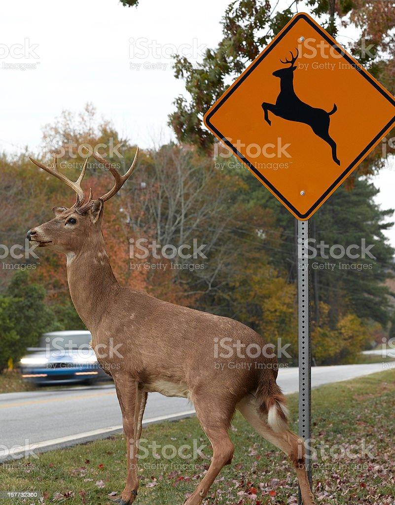 Road Crossing stock photo