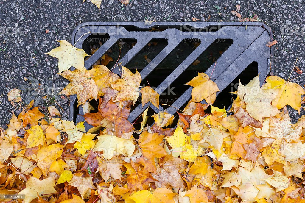 Road Drainage Metal Grill Drain Cover with Autumn Maple Leaves stock photo