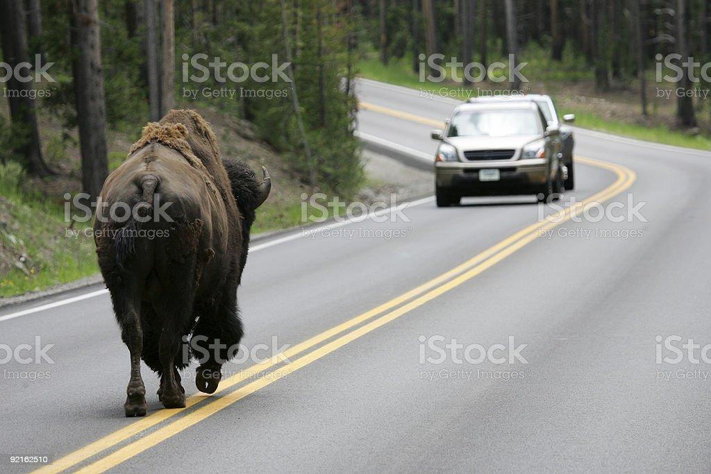 Road Encounters stock photo