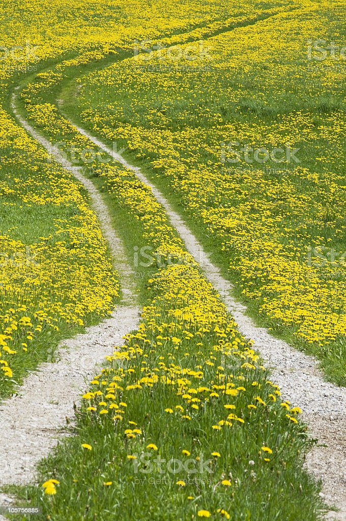 Road full with Dandelions royalty-free stock photo