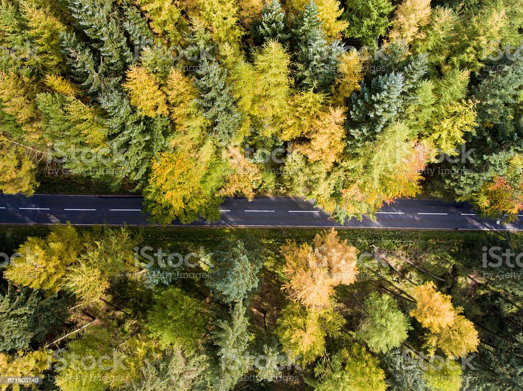 Road going through forest with autumn colours, aerial photo stock photo
