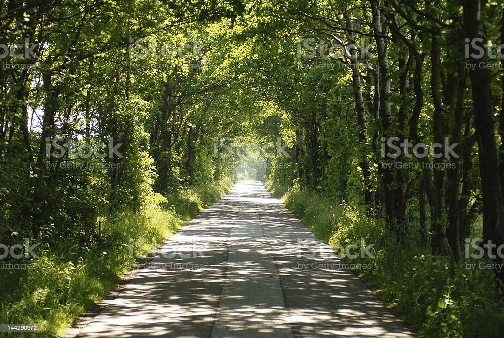 Road going through the forest royalty-free stock photo