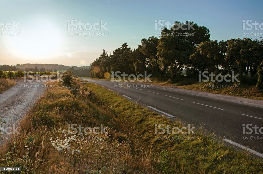 Road, grove and fields at sunrise near the village of Châteauneuf-de-Gadagne. stock photo