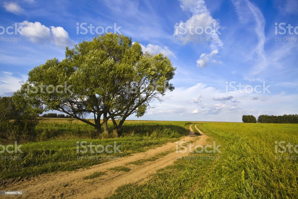 road in a field near lonely tree royalty-free stock photo