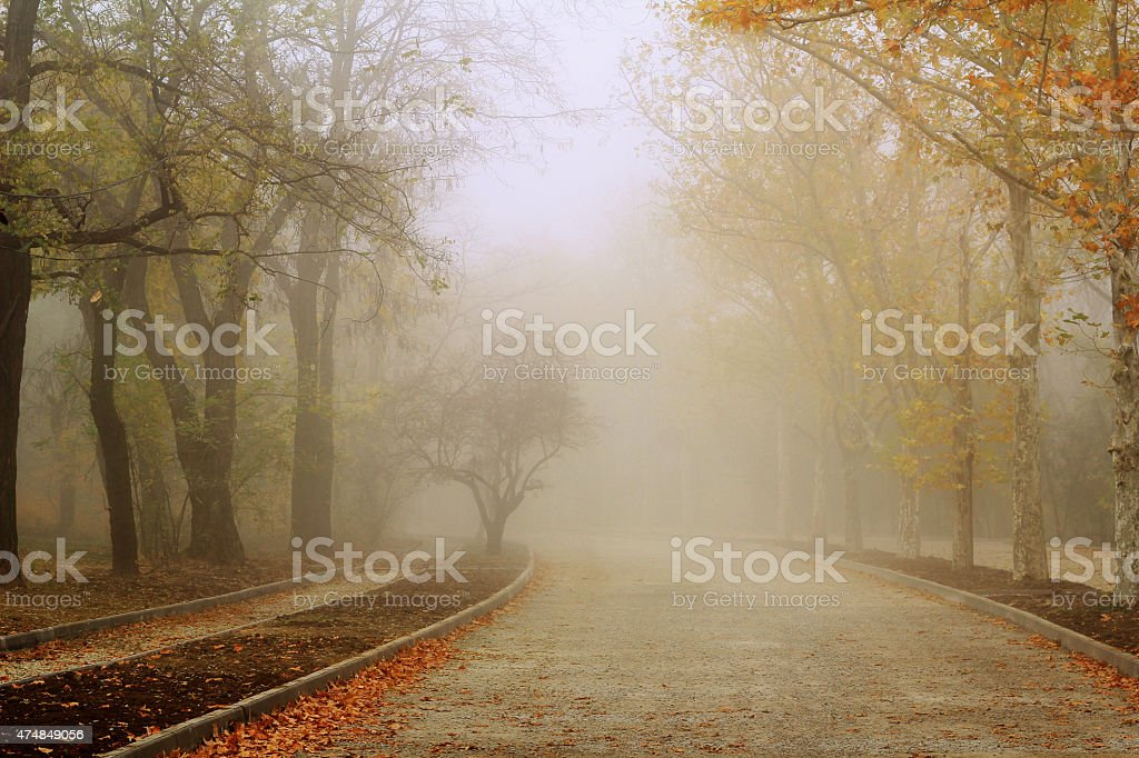 Road in autumn colours stock photo