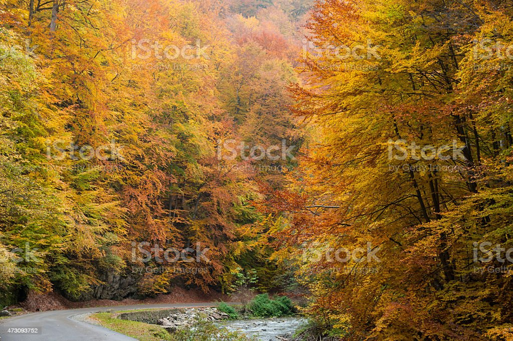 Road in autumnal forest royalty-free stock photo