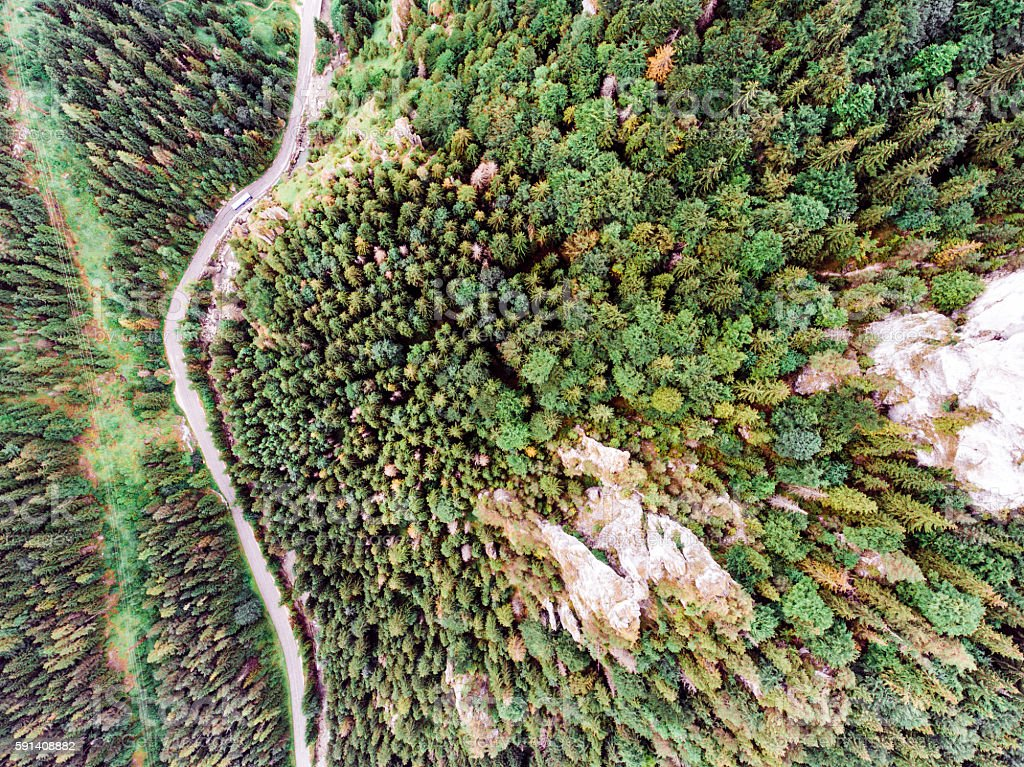Road in coniferous forest, rocky hills. Mala Fatra, Slovakia. stock photo