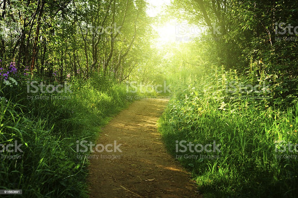 road in deep forest royalty-free stock photo
