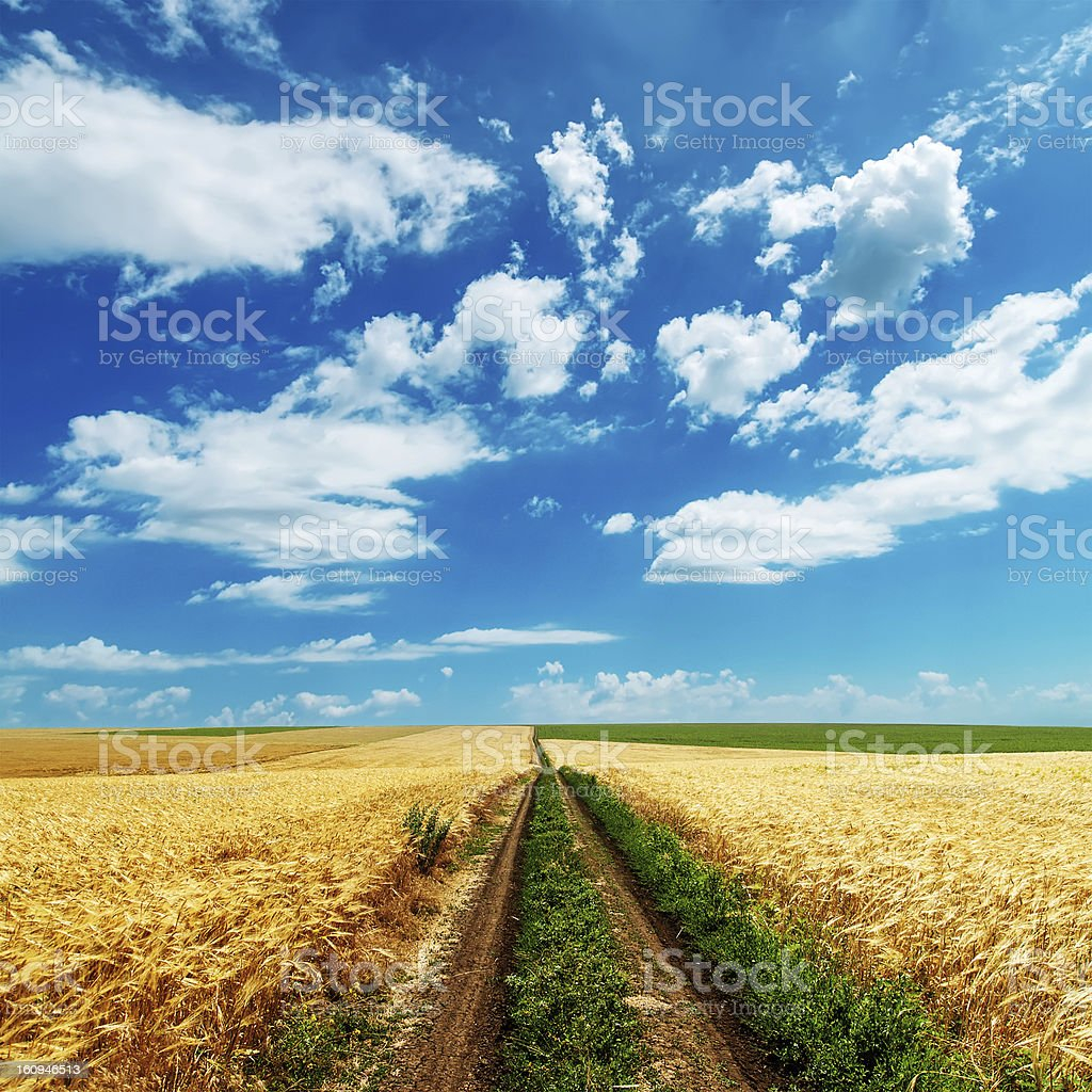 road in golden fields under cloudy sky royalty-free stock photo