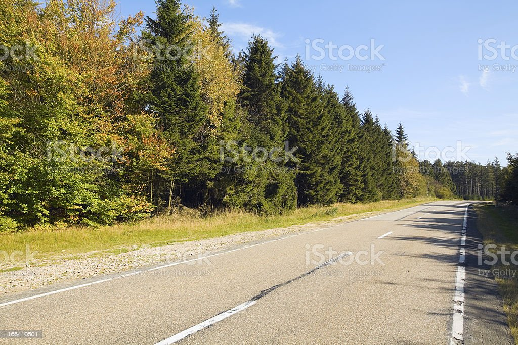 Road in Hautes Fagnes stock photo