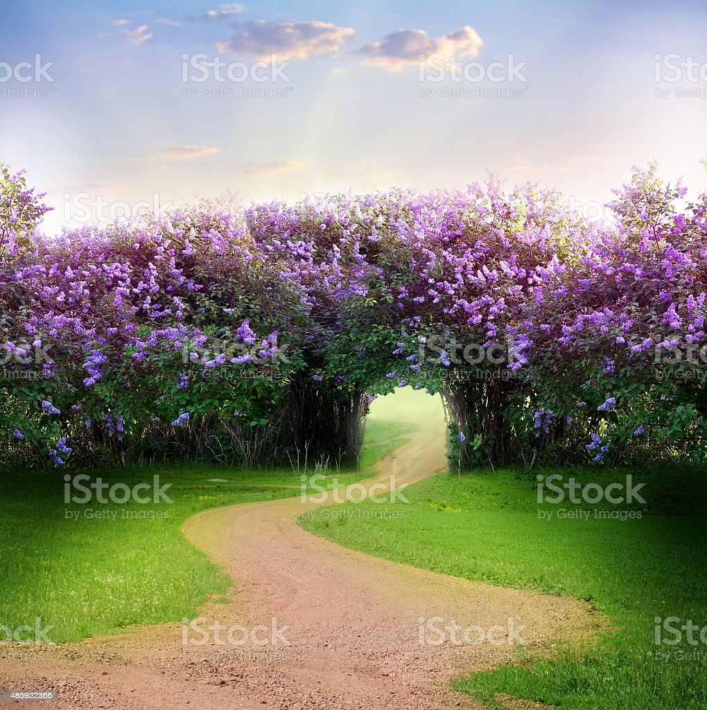Road in magic spring forest stock photo