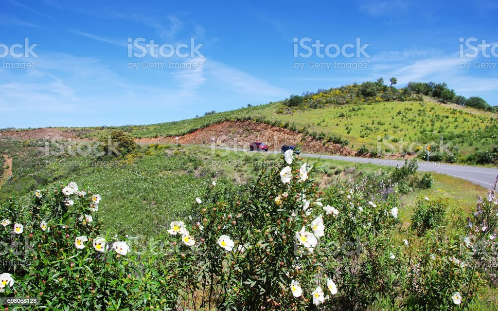 road in natural park, guadiana valley stock photo