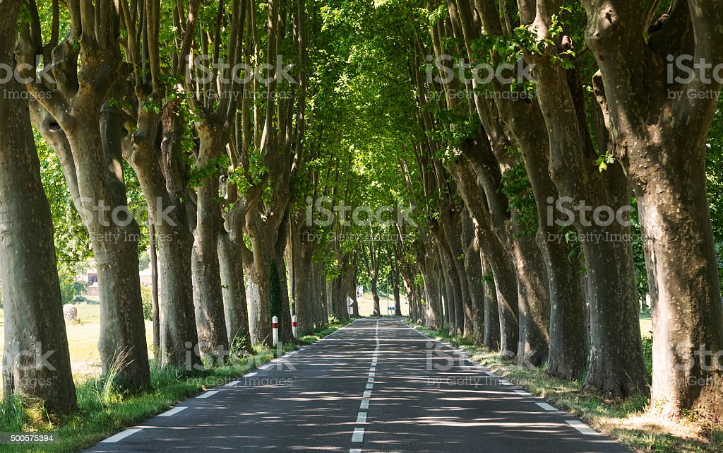 Road in Provence (France) stock photo