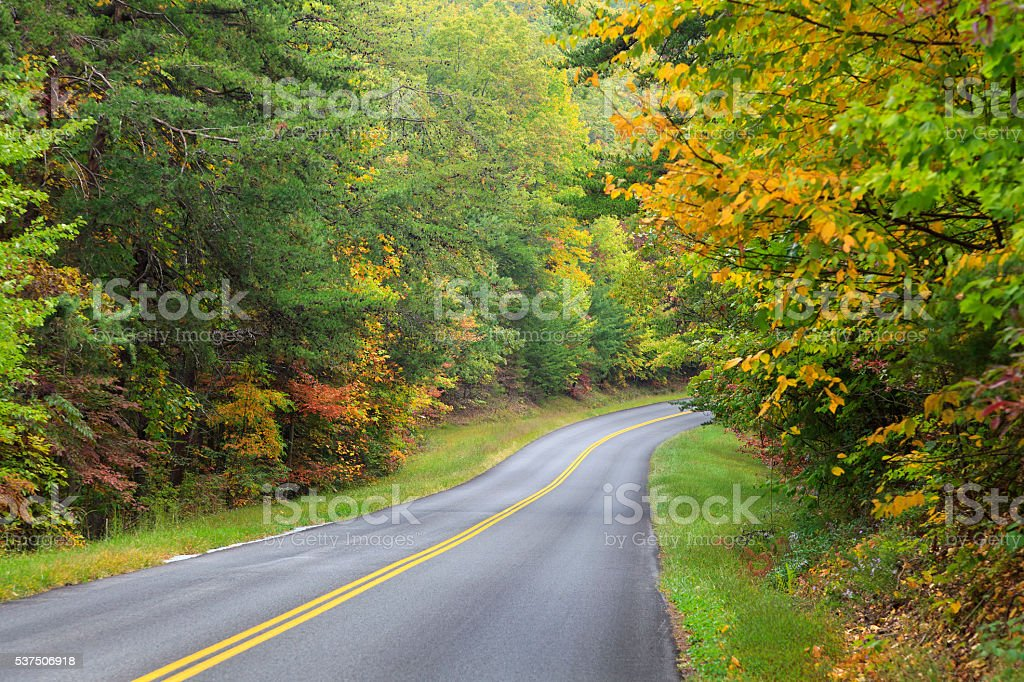 Road in the Fall stock photo