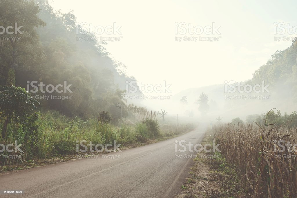 Road in the Fog forest vintage style stock photo