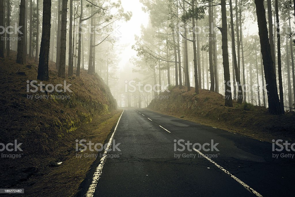 Road in the Forest Trough Fog, Canary Islands royalty-free stock photo