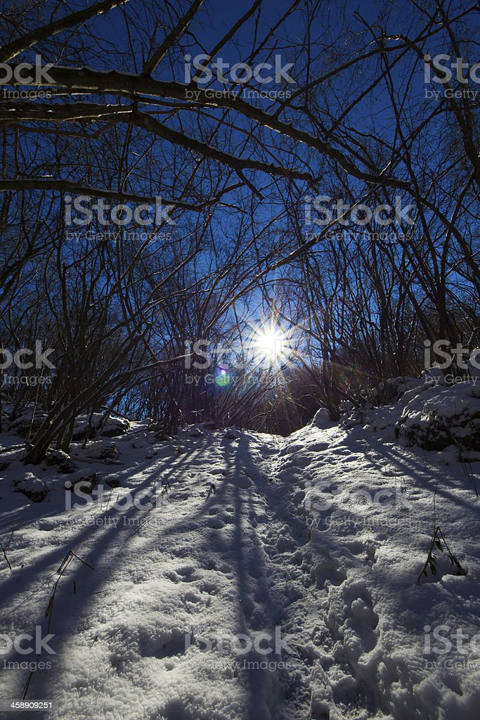 road in the frosty wood royalty-free stock photo
