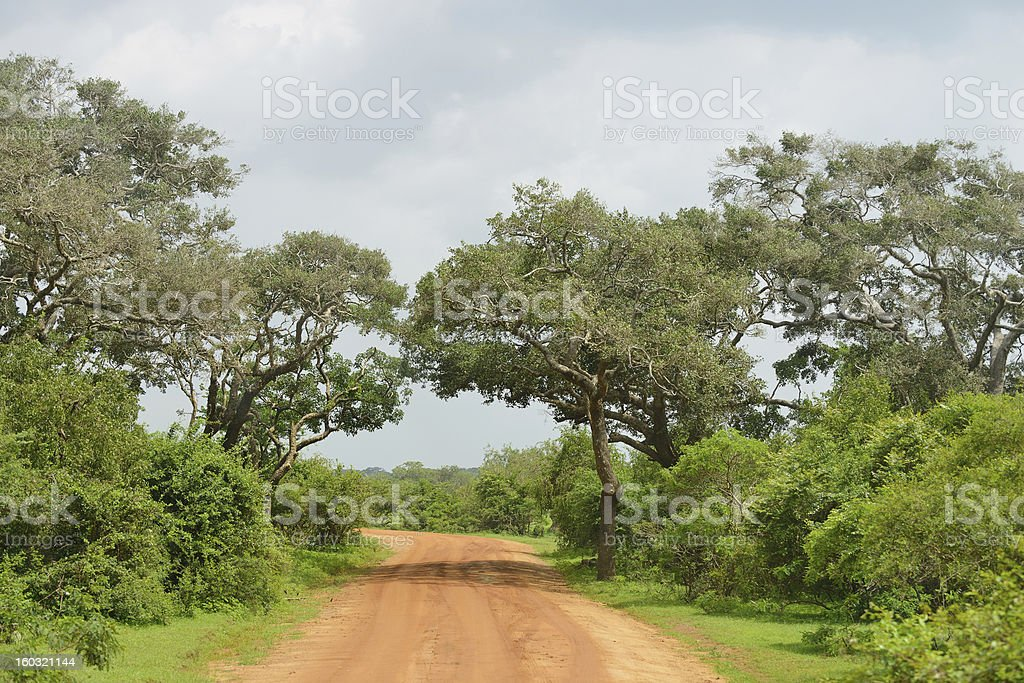 road in the jungle royalty-free stock photo