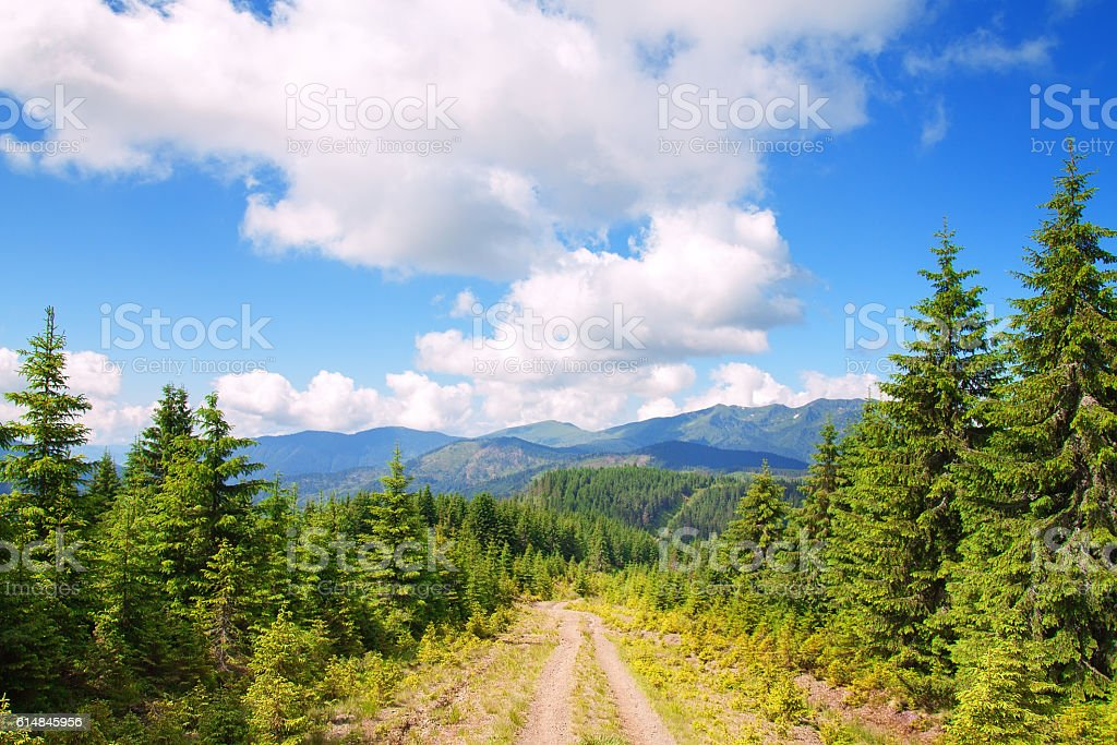 road in the mountains with pine trees stock photo