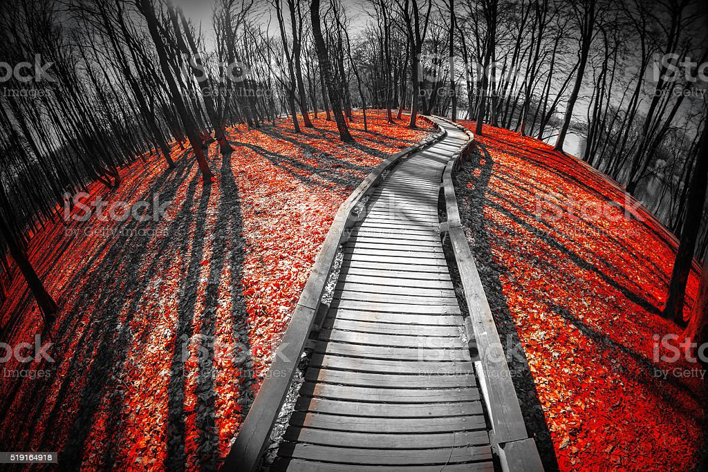 road in the red forest. stock photo