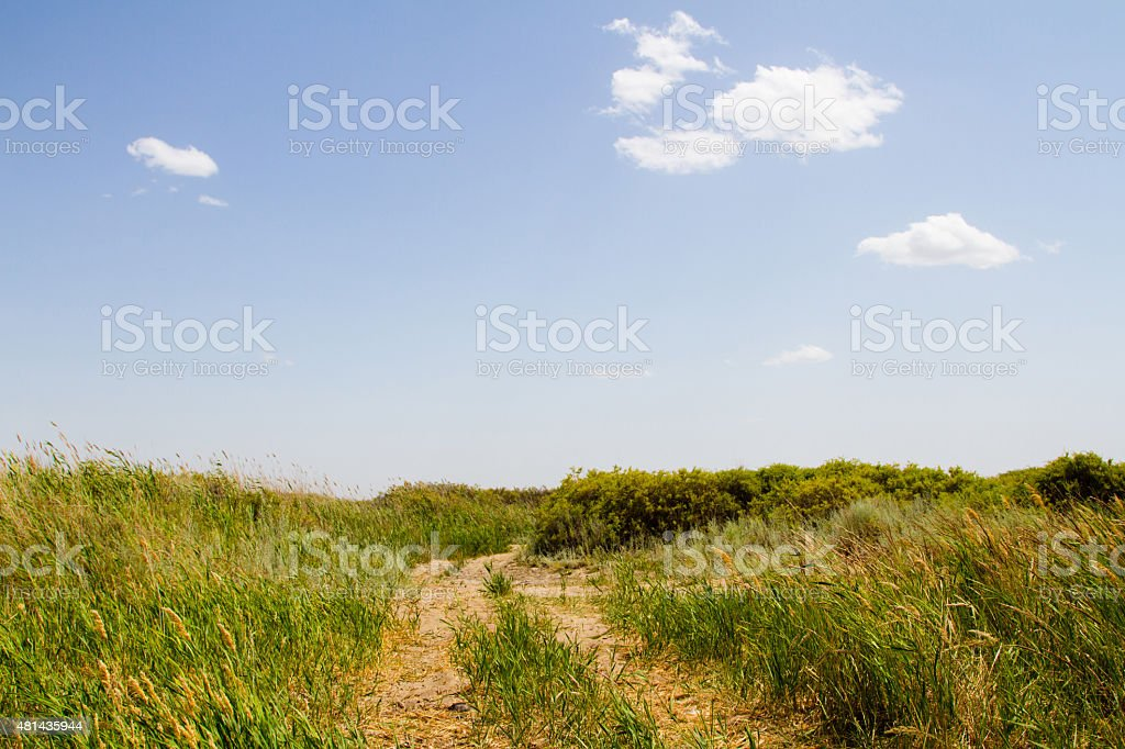 road in the reeds stock photo