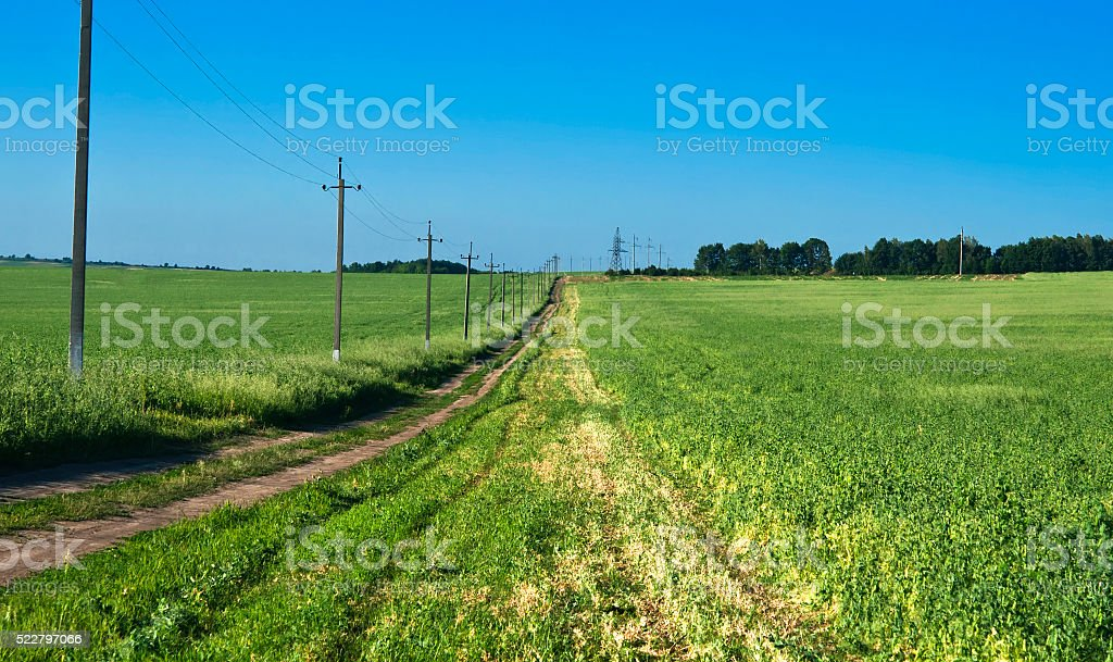 road in the the field pea stock photo