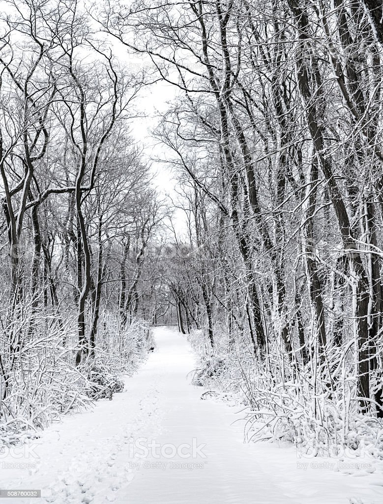 Road in the winter forest after snowfall stock photo