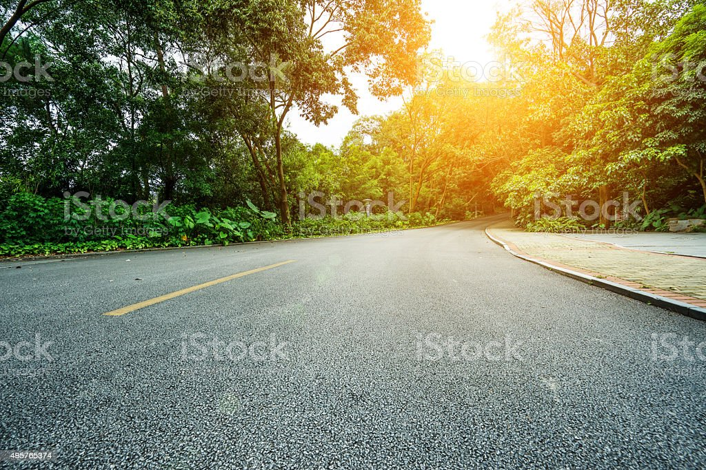 road in the woods stock photo