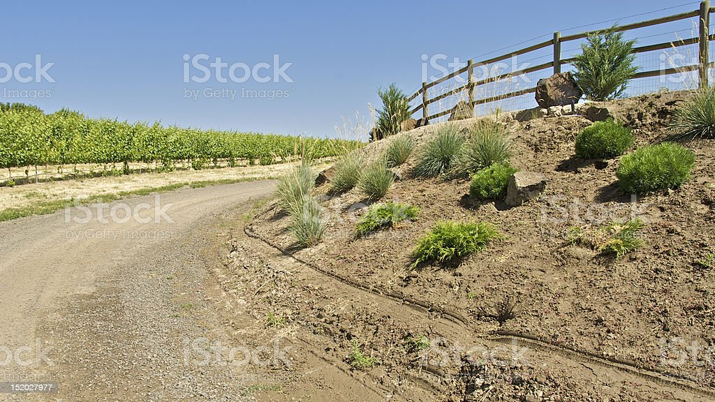 Road In Vineyard stock photo