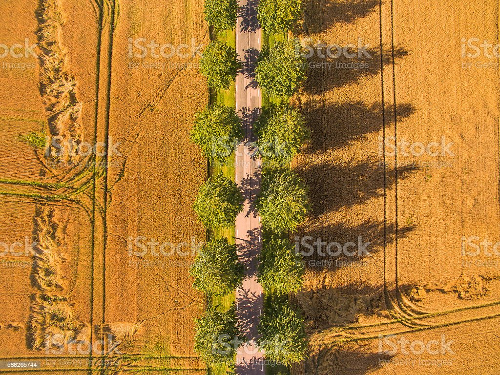 Road in Wheat Field Aerial View stock photo