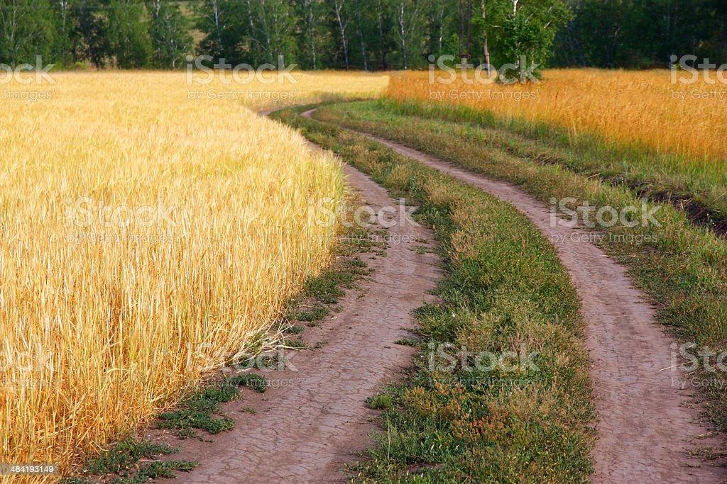 road in wheat field stock photo