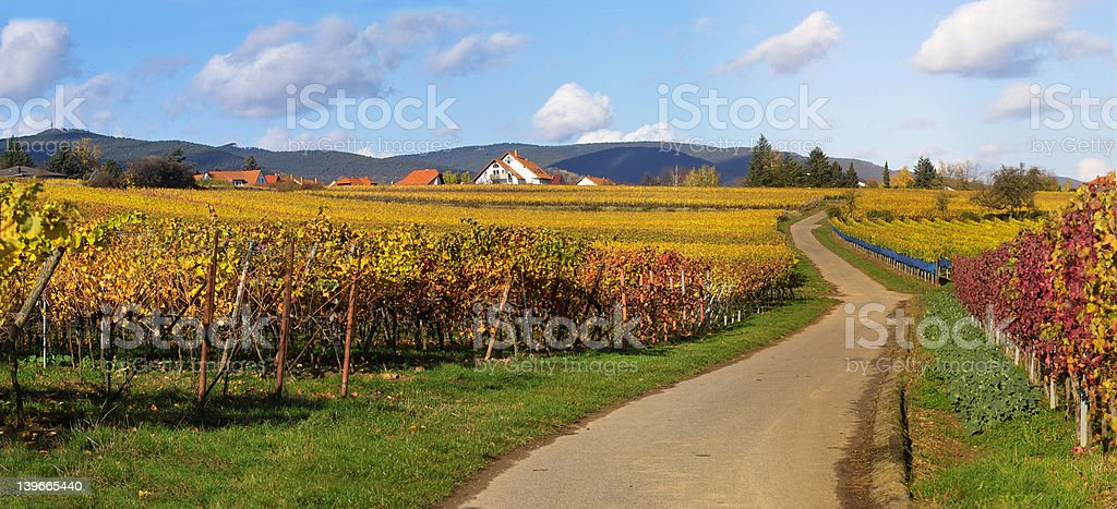 Road in wineyards royalty-free stock photo