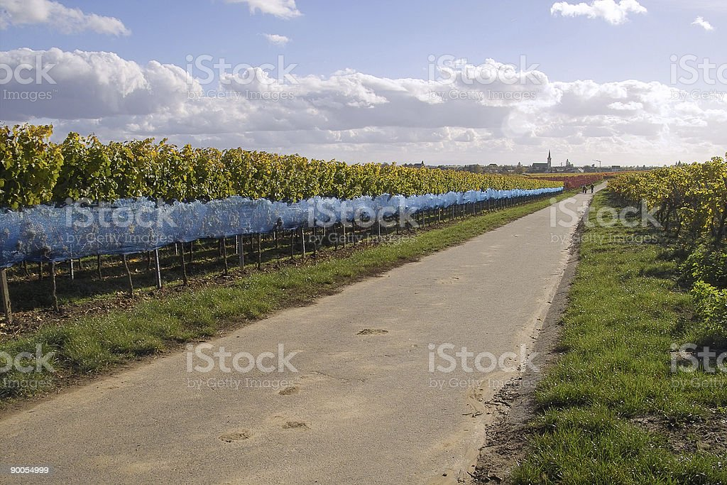 Road in wineyards stock photo