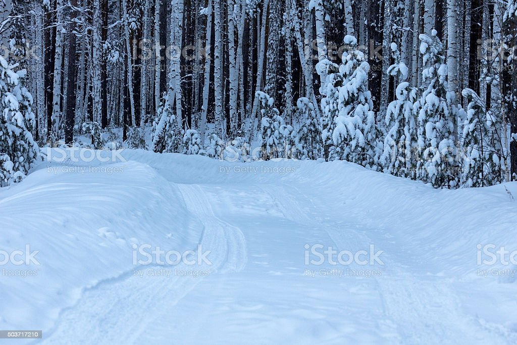 Road in winter forest stock photo