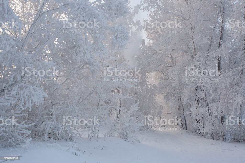 Road in winter forest. Winter beautiful landscape royalty-free stock photo