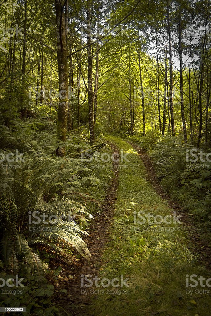 Road into the forest stock photo