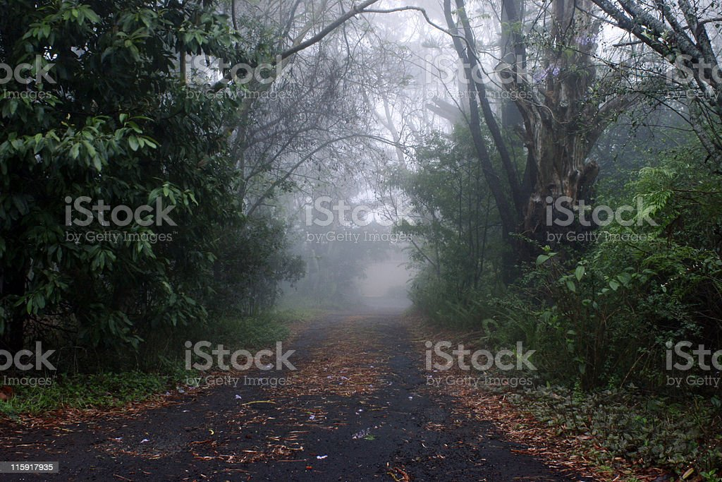 Road into the mist royalty-free stock photo