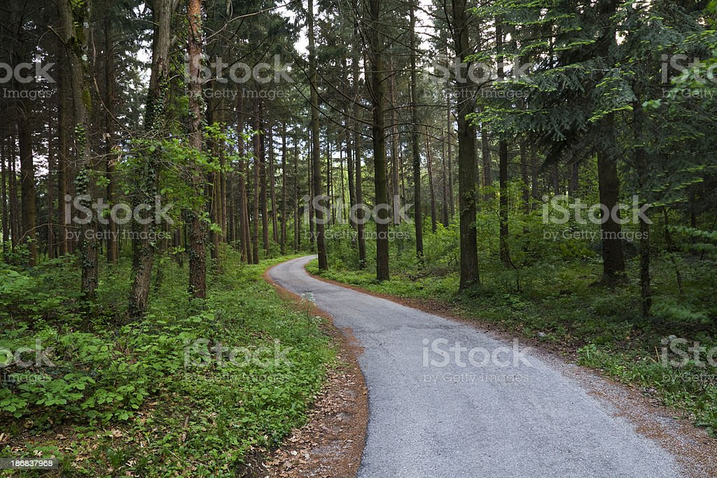 Road into twilight forest stock photo