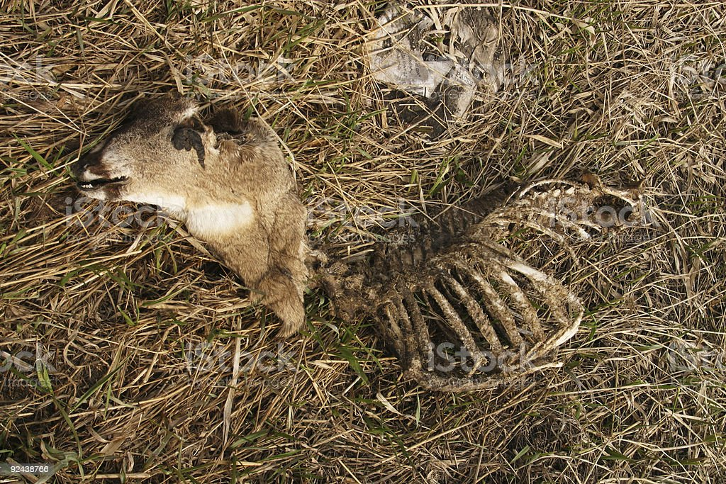 Road Kill Dead Deer royalty-free stock photo