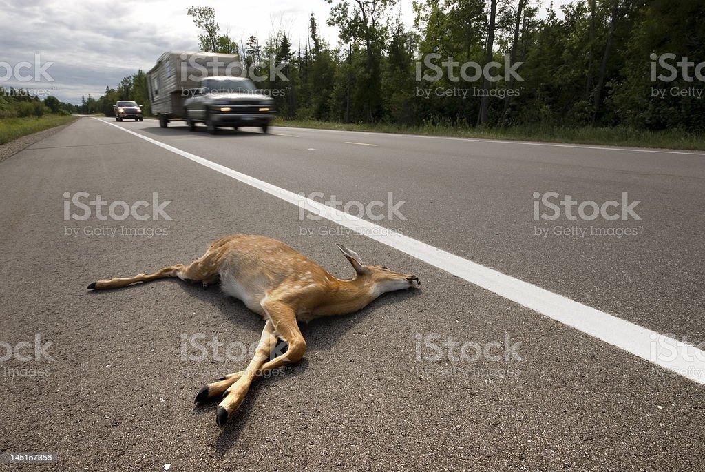 Road kill deer stock photo