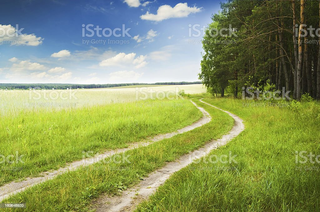 Road near wood on a decline royalty-free stock photo