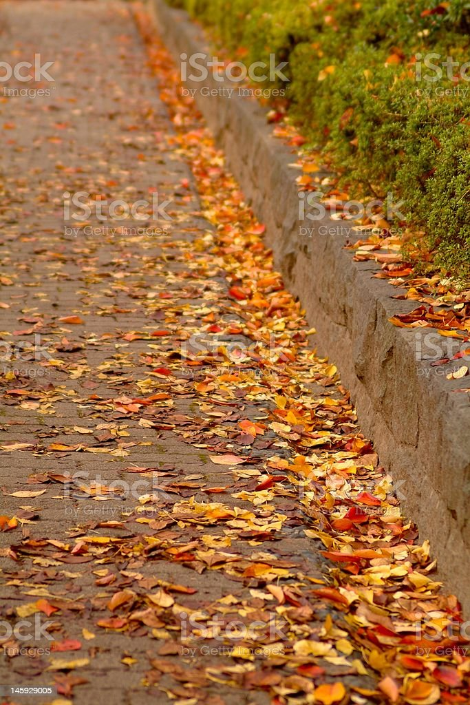 Road of fallen leaf royalty-free stock photo