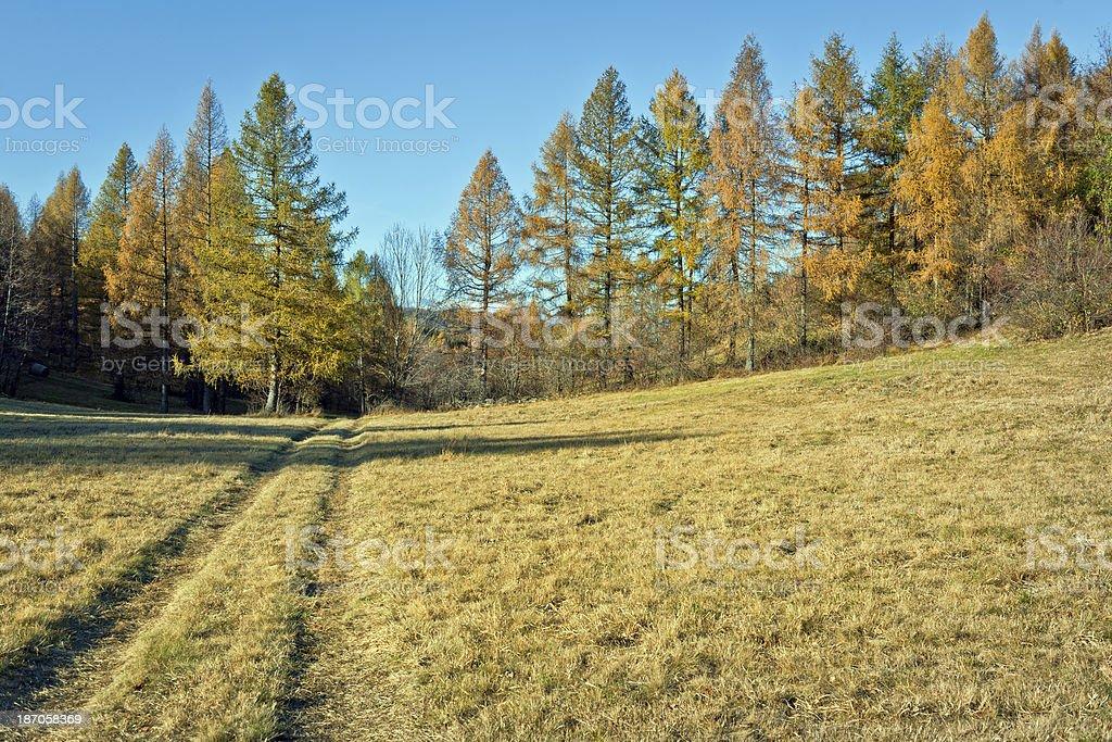 Road on Pasture Autumnal Landscape Slovenia royalty-free stock photo