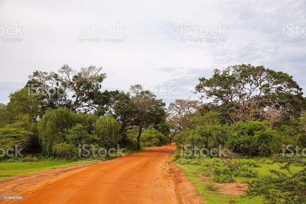 Road on safari jeep at jungle in Sri Lanka stock photo