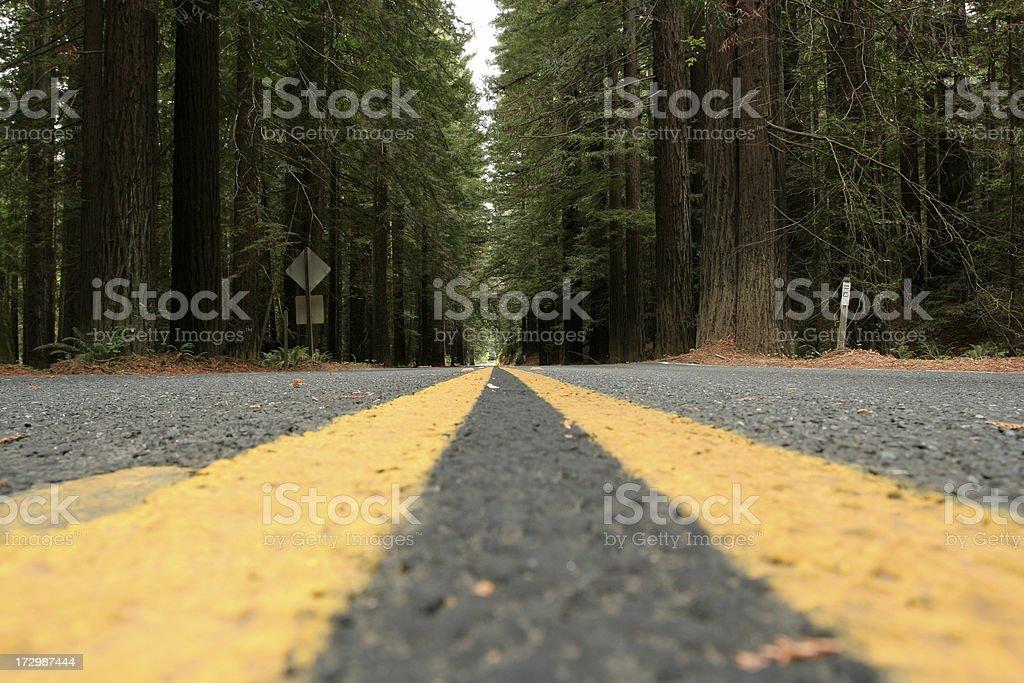 Road Redwood royalty-free stock photo