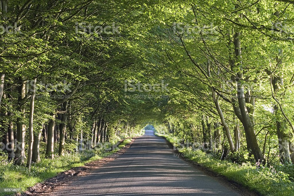 Road running through a tunnel of trees stock photo