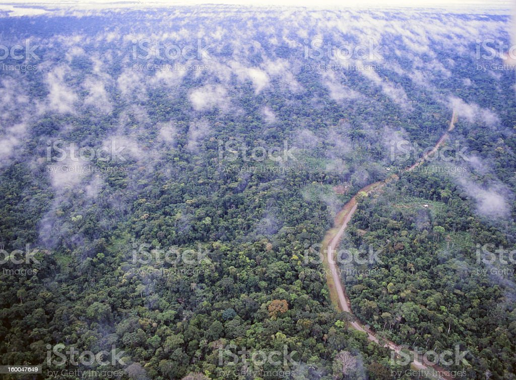 Road running through primary rainforest royalty-free stock photo