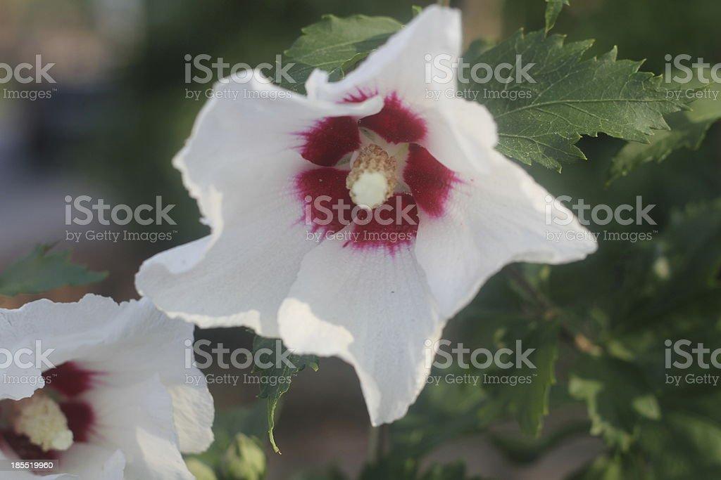Estrada lado flor foto de stock royalty-free